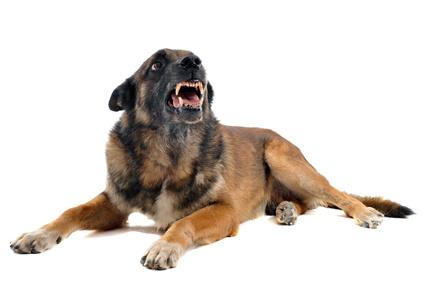 Mon chien mord, que faire et comment réagir ?