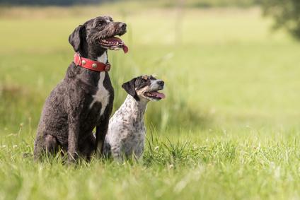 Apprendre l'ordre assis à son chien - Apprendre à un chien