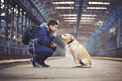 Les ordres de base à apprendre à son chien dès les premiers mois