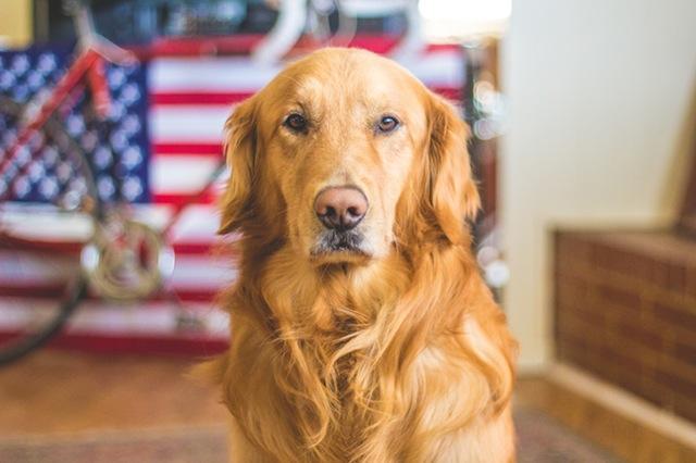 comment apprendre à son chien a rester seul
