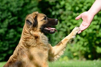 Chiots À Adopter - 10 astuces à connaître - Les bases de l'éducation canine - Gratuit