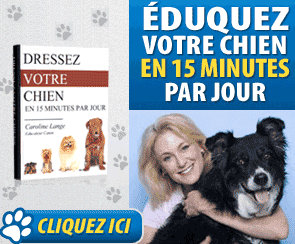 dresser son chien methode