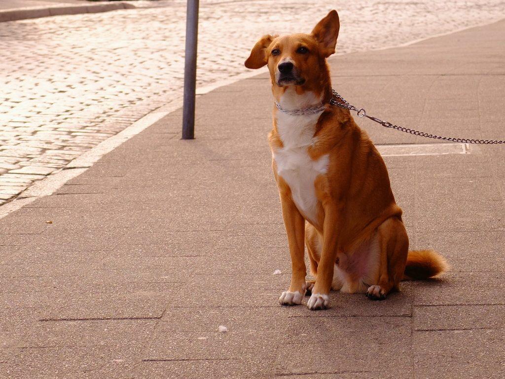 marcher en laisse avec son chien