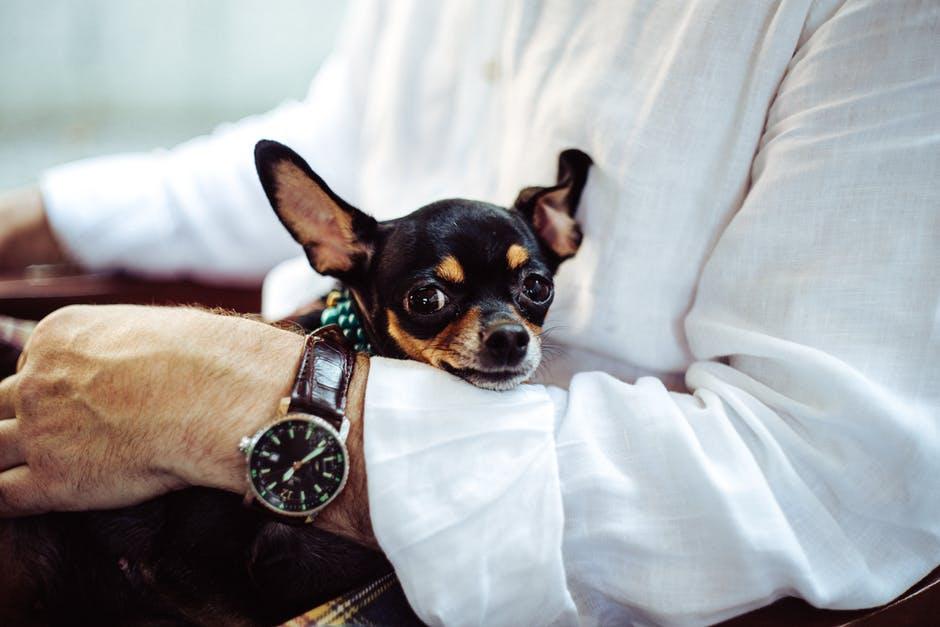 Comment récompenser son chien lorsqu'il réussit un exercice ?