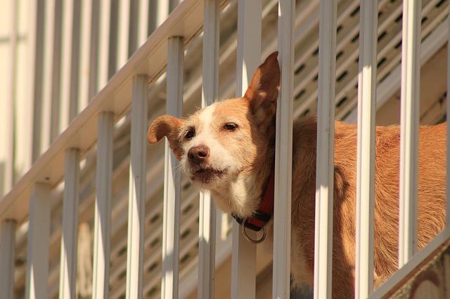 chien monte la garde