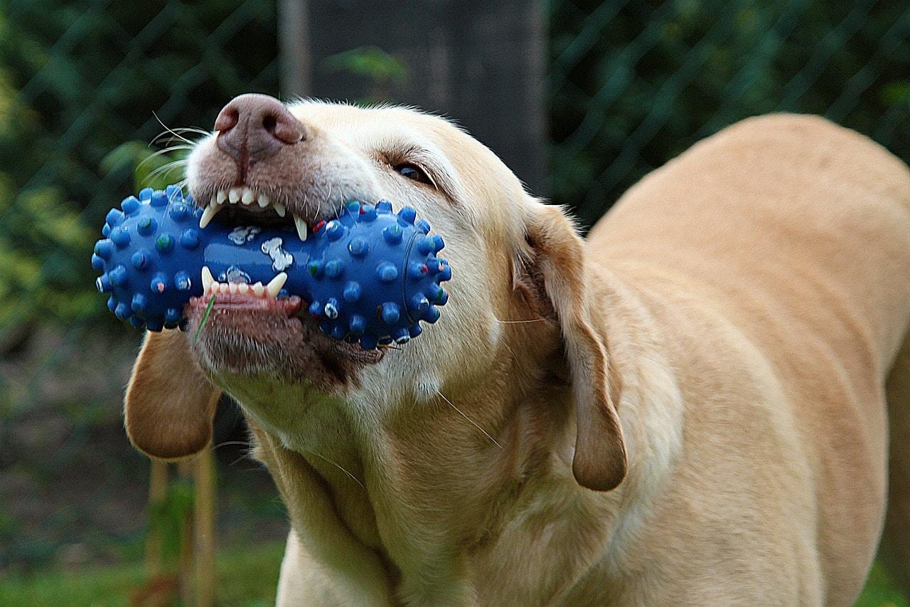 Les meilleurs jouets pour chiens | Top des jouets pour chiens