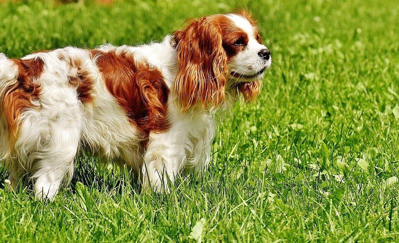 Choisir son chien - Tout savoir sur les différentes races