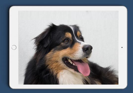 Comment dresser son chien | Toutes les clés pour éduquer