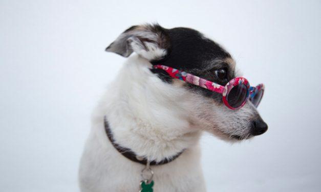 Quelle est la meilleure assurance pour chien ?